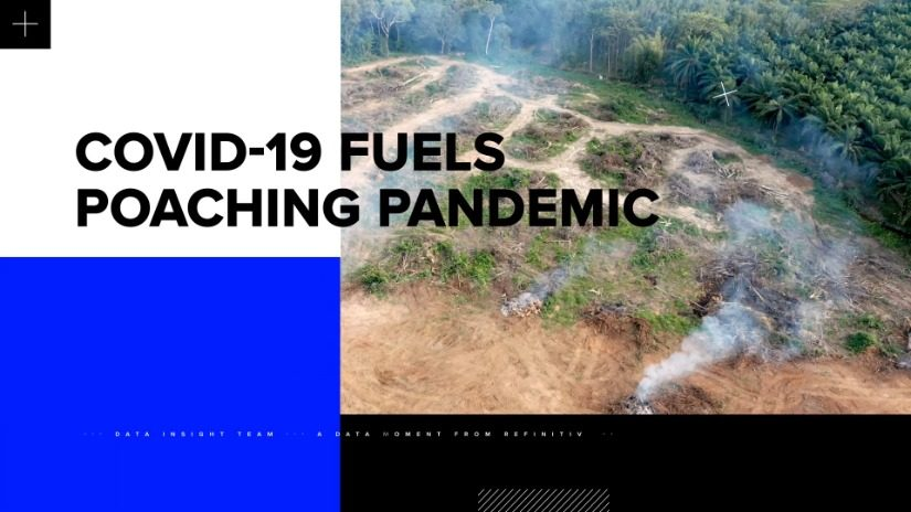 Covid-19 fuels poaching pandemic video thumbnail with deforestation in background