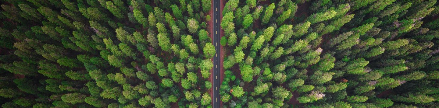 Arial view of forest highway