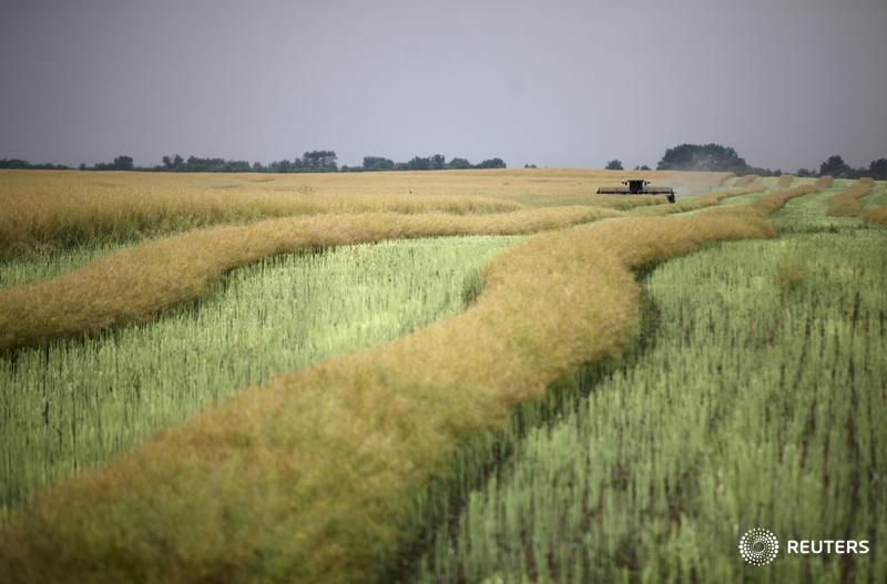 Buy-Side fintech Thomson Reuters blog visual quote. A combine machine harvests rapeseed in an agrarian field near the village of Stoderevskoye in Stavropol region, Russia, June 16, 2015. Picture taken June 16, 2015. REUTERS/Eduard Korniyenko TPX IMAGES OF THE DAY - RTX1GUP1