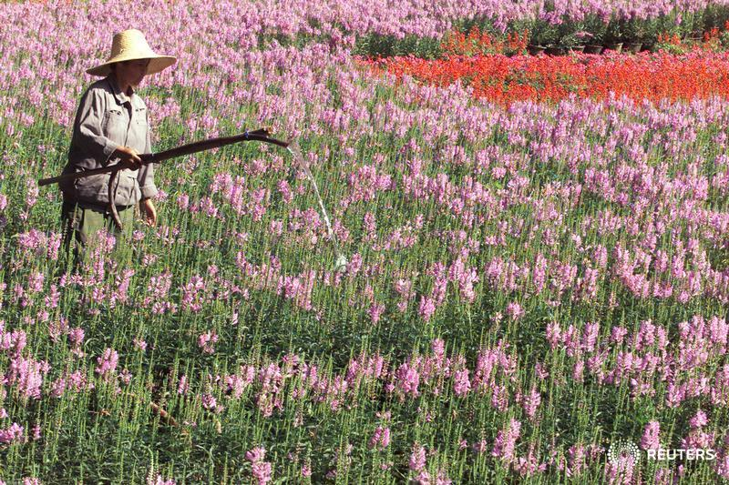 WORKER WATERS A FLOWER GARDEN AT A MEMORIAL PARK IN NANJING.